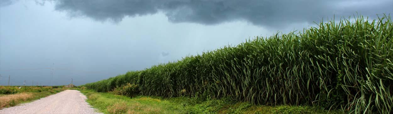 the sugar plantation st joseph plantation